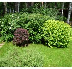 Пример озеленения участка 2