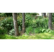 Пример озеленения участка 4