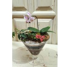 Садик из комнатных растений в стеклянной вазе в форме рюмки. Состав: Мини-фаленопсис, два вида фиттонии, традесканция. Уход: полив, освещение.