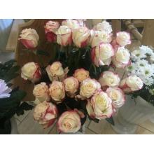 суперская роза свитнесс