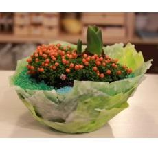 Садик из нертеры и гиацинта в восковом кашпо. Уход как за обычными горшечными растениями (полив+освещение)