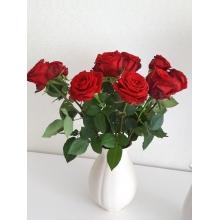 11 роз сорта гран при с атласной лентой. (российский производитель по голландской технологии)
