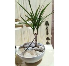 Мини-сад из драцены, камней и песка с мини-граблями для молчаливой медитации :-)