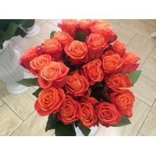 восхитительная роза экспрессия