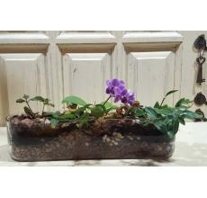 Садик в овальном стеклянном кашпо. Состав: Мини-фаленопсис, два вида фиттонии, традесканция. Уход: полив, освещение.