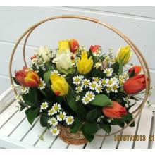 Небольшая аранжировочная корзина из 15 разноцветных тюльпанов с матрикарией и зеленью.