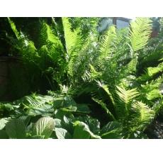 Пример озеленения участка 18