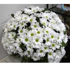 Букет из 25 кустовых белых хризантем с зеленью и лентами.