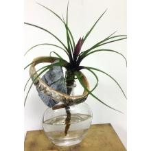 Комнатное растение тилландсия с сохраненной корневой системой в бутылке с декоративными элементами. Время сохранения более 45 дней. Требуется доливать воду в бутылку.