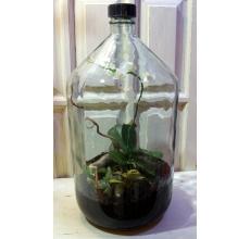 Сад в бутылке это закрытая биосфера. Его не нужно открывать, поливать или ухаживать другим способом. Растения сами поглощают и вырабатывают кислород/углексилый газ, поглощают и испаряют воду.