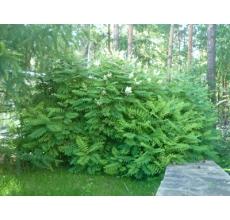 Пример озеленения участка 21