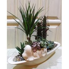 Сад из комнатных растений. Состав: кашпо в форме лодки, кашпо в форме пса (керамика. произв. Польша) драцена, фиттония, суккуленты, песок, галька.