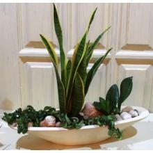 Сад из горшечных растений в керамическом кашпо с морской галькой для декорирования грунта.
