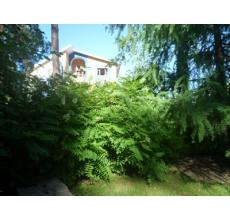 Пример озеленения участка 16