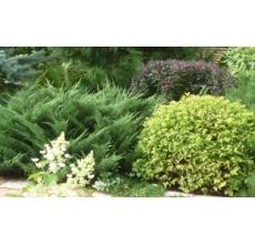 Пример озеленения участка 14