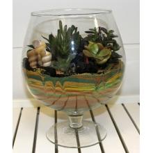 Сад из разных суккулентов, ракушек,декоративного песка и камней в стеклянной вазе.