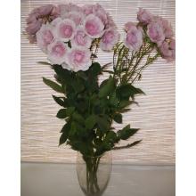Лиловая кустовая роза (голландия) высота 80 см.