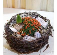 Корзиночка из березовых веток с садиком из горшечных растений (нертеры, гиацинта)