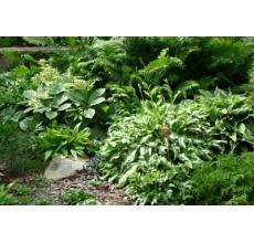 Пример озеленения участка 5