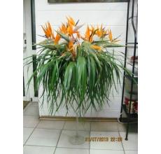 Напольная композиция в вазе на тонкой ноге. Состав: 15 цветов стрелиции, коробочки лотосов, зелень, рафия, сухоцветы, палочки.