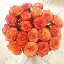 яркая качественная роза с лучшей плантации Гарда