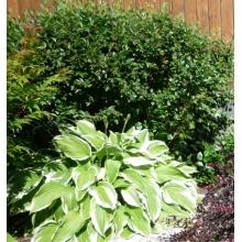 Пример озеленения участка 9
