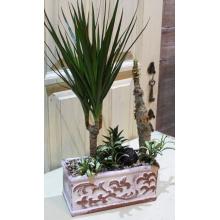 Сад из комнатных растений в керамическом кашпо (производит. Польша) Состав: драцена, фиттония, суккуленты, песок, галька.