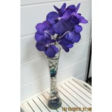 Ветка орхидеи ванды с ракушками