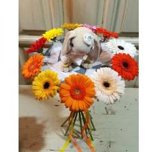 Ласковый теплый букет из 11 разноцветных радостных мини-гербер на каркасе из войлока с авторской игрушкой - зайкой.