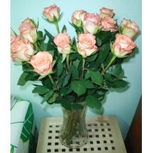 Розы с нежно-розовой окантовкой. Эквадор.