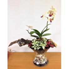 Сад из живых горшечных растений. Состав: орхидея фаленопсис, фитония, ракушки, камни, кора, мох, грунт в стеклянной вазе. Все растения высажены таким образом, что сохраняют обычную жизнестойкость и не требуют дополнительного ухода