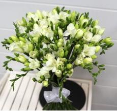 Букет из 35 белых ароматных фрезий с белой широкой армированной лентой.