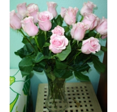 Розовые розы Эквадор