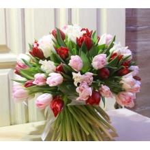 Букет из 79 сортовых тюльпанов красного, нежно-розового и белого цвета с армированной лентой.