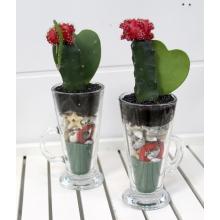 Набор из горшечных растений. Два стакана с декоративные отсыпками, в которые высажены кактусы (гимнокалициум) и хойя керри в форме сердца.  Горшечные композиции не требуют большего ухода, чем обычные комнатные растения.
