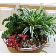 Уход за садом такой же как и за обычными комнатными растения (полив, свет, тепло)