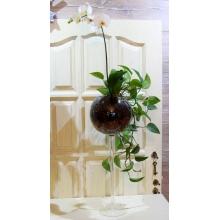 Сад в высокой стеклянной рюмке из орхидеи фаленопсис и сциндапсус. Высота 110-120 см
